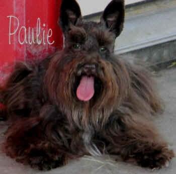 Paulie_5