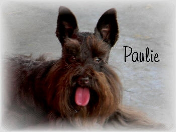 Paulie_6